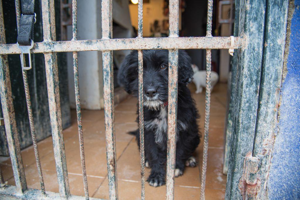 Roxanna hinter Gittern